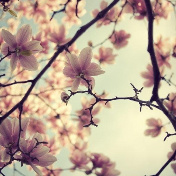 "Pink Magnolia Flower Print, Flower Photography, Spring Floral Decor, Nature Photography, Home Decor, 8x8, ""A Little Flirt"""