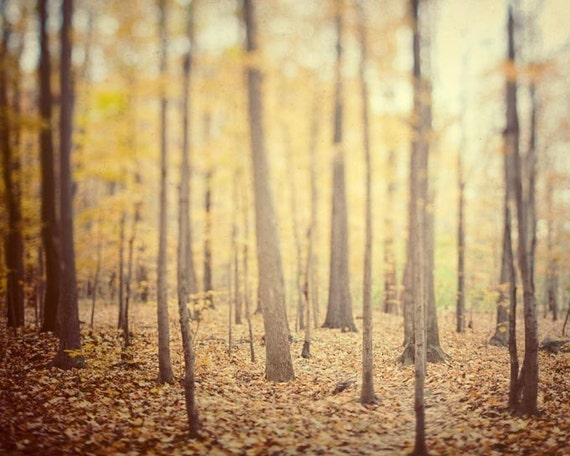 Rustic Autumn Woodland Landscape Photography, Fall Decor, Fall Photography, Nature Art, Rustic Decor - The Secret Life of Trees