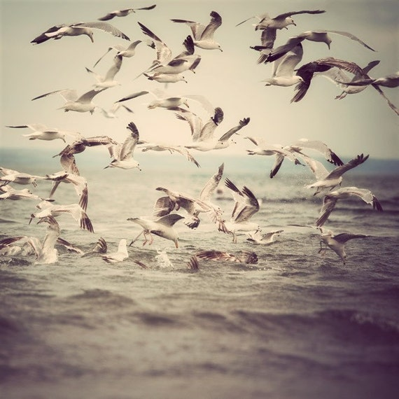 Bird photograph, Seagulls in flight over ocean water, Nautical Summer, Fine art nature photography, 8x8 - On the Fly