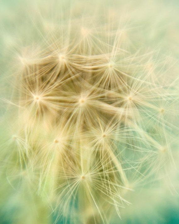 "Pastel Dandelion Print, Flower Photography, Spring Decor, Floral Art Print, Garden Art, Yellow and Mint Green, ""Stargazing"""