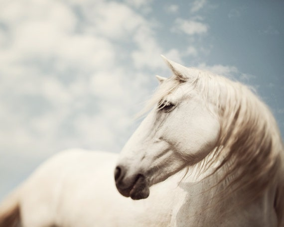 """Horse Print, Nature Photography, Horse Decor, White Horse, Animal Print, Fine Art Photography, Equestrian Art """"Wild is the Wind"""""""