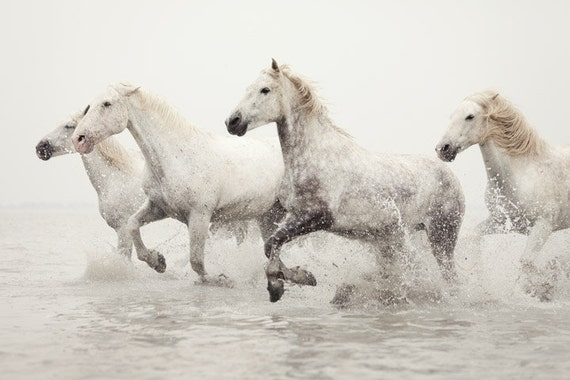 Horse Photography, White Horses Running in Water, Horse Art, Camargue, Winter, Nature, Animal, Ivory - Breathless
