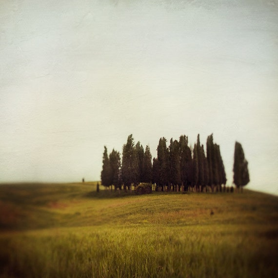 Tuscany Art, Italy Photography, Rustic Decor, Italian Landscape Photography, Cypress Trees, 8x8 Print - Land of Sighs