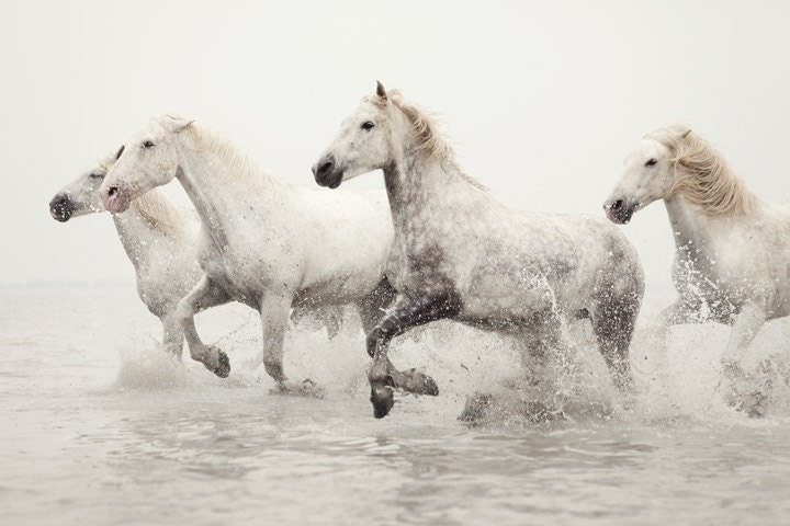 Fine Art Photography Horse Photography Print Horse Art