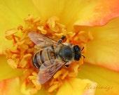 Macro bee  4x6