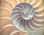 Nautilus Shell Spiral Card