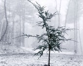 Little Tree - blank photo greeting card of christmas tree in snow