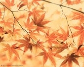 SALE - 60% off - Japanese Maple No. 3 - fine art nature photography print
