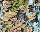 SALE - 20 percent off - Lichen Abstract - fine art nature photography print