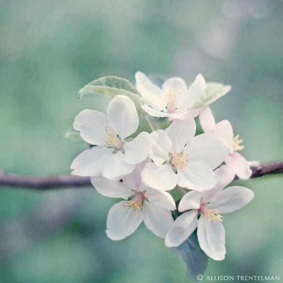 "SALE - 7x7 Print - ""Apple Blossoms No. 1"" Fine Art Photography Print - Home Decor - Wall Art - Under 25"