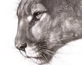 Puma 5.5 x 6.5 Print