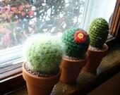 Crochet Cacti set of four