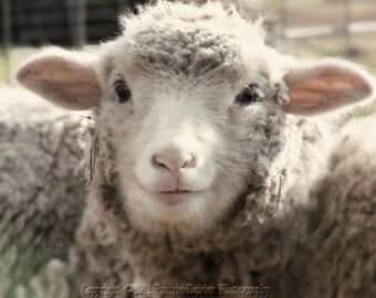 "Sheep photo, Farm photography, Country, Rustic, Farm wall art, Lamb, 8x10, 11x14, 16x20, ""Richie"""