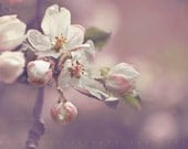 From the Orchard- Spring Flower  Photography 5x7