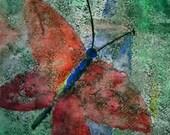 Kakoon a Butterfly Watercolor