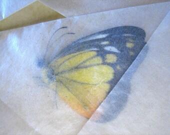 Raw Dried Butterflies - Lot of 10