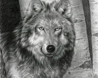 Wolf Art WISE EYES Original Artwork by Carla Kurt