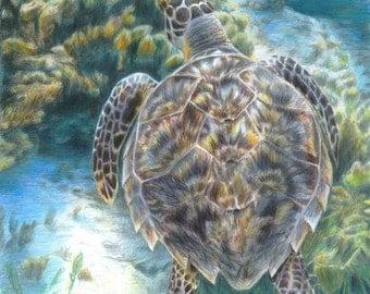 Turtle Art Ocean Swimming Sealife Original Artwork by Carla Kurt