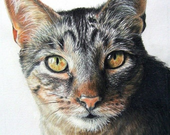 Hand-Drawn Custom Pet Portrait 9 X 12 Colored Pencil Art by Carla Kurt cat dog horse memorial