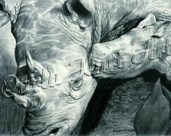 RHINO LOVE Original Pencil Drawing by Carla Kurt