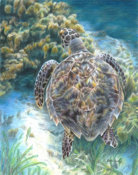 Turtle Art SWIMMING TURTLE print by Carla Kurt Signed 11 x 14 wwao ebsq