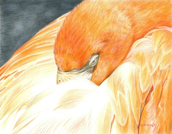 Bird Art SLEEPING FLAMINGO print by Carla Kurt Signed 11 x 14 wwao ebsq