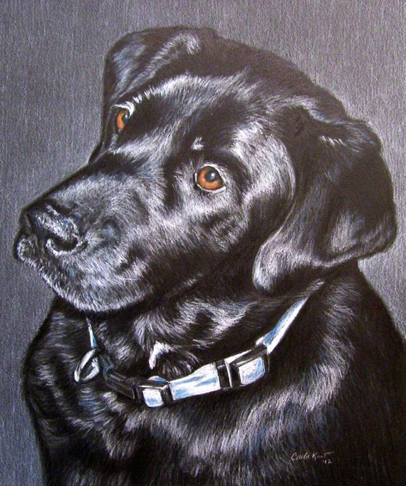 Custom Dog Portrait 8 x 10 Colored Pencil Art by Carla Kurt cat dog horse memorial pet portrait