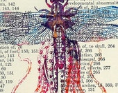 Specimen  8. Dragonfly\/Octopus on Anatomy book from 1932