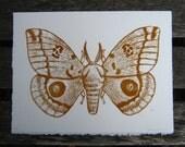 Io Moth Woodblock Print