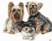 Custom colored pencil portrait of your pets by Harry 11 x 14 original art