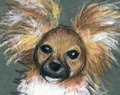 Custom Colored Pencil Sketch Pet Portrait by Harry 5 x 7