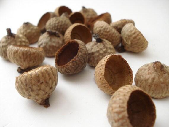 1 ounce of Medium Black Oak Acorn Caps