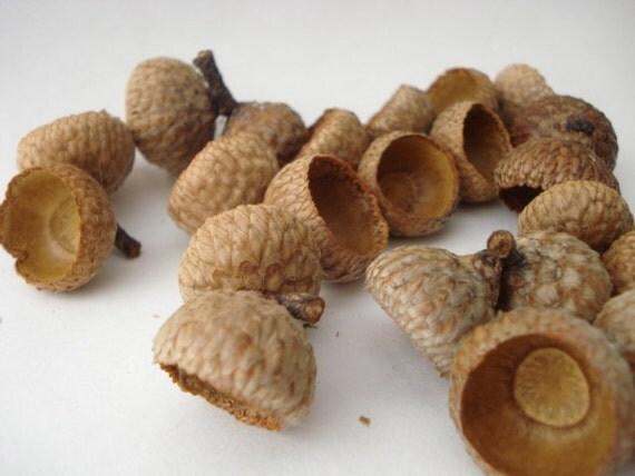 4 ounce of Black Oak Double Acorn Caps - Bulk Discount
