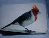 ATC ACEO OOAK Red headed bird original photograph print on card