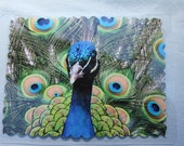Laminated 3x4 original photograph peacock print poem card