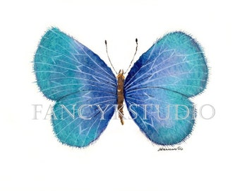 546 BUTTERFLY 5x7 Limited Edition Art Print