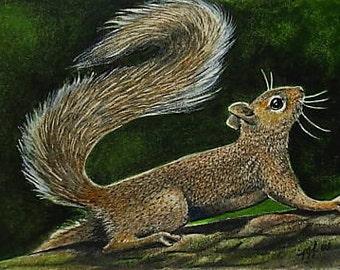 Squirrel Art Melody Lea Lamb ACEO OE Print