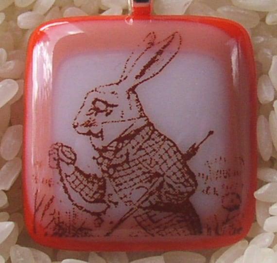 Rabbit, Late...... Poor OCD Rabbit