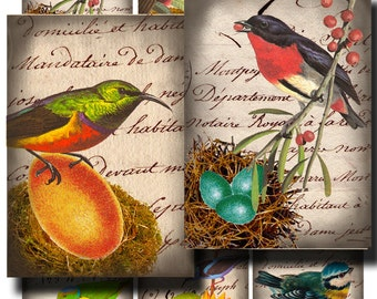 Vintage Birds with Nests and Eggs for DIY arts and crafts, Digital collage sheet no. 228