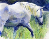 White Horse Percheron art Print of my Watercolor Painting Day Off