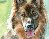 German Shiloh Shepherd Dog Art Print of my watercolor painting