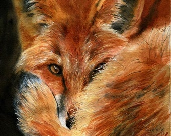 Red Fox Portrait Art Print Reproduction