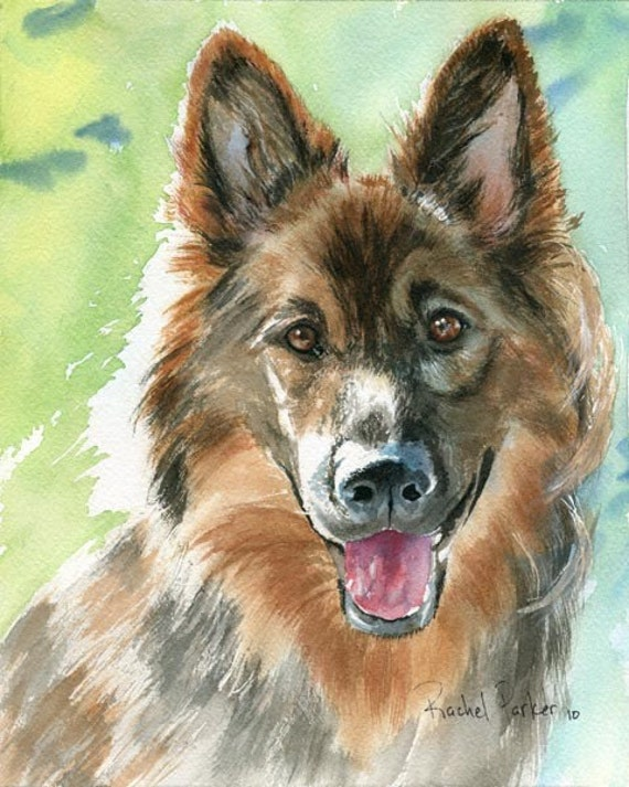German Shiloh Shepherd Dog Art Print of my watercolor painting