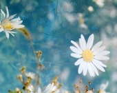 daisies: nature photography. floral abstract decor. teal turquoise blue wall art. dreamy photo. daisy flower print. multiple exposure photo.