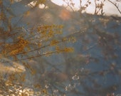 between the branches: nature photography. abstract photograph. surreal photography. dreamy bokeh photo. nature tree wall art. fine art print