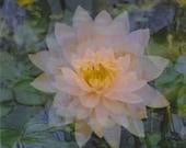 floating lotus: nature photography. flower photography. surreal photography. multiple exposure photograph. zen decor. pink fine art print.