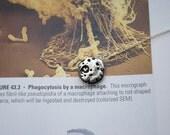Macrophage Necklace
