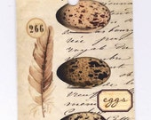 Feather  and Eggs Gift Tags - Bird Feather - Bird Eggs - Vintage Style by Bluebird Lane