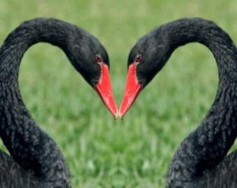 VALENTINE Swan Heart CARD