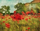 Poppy Field Italy, Set of two 8x12 Original Signed Photos -- RESERVED for johannamartinezevent